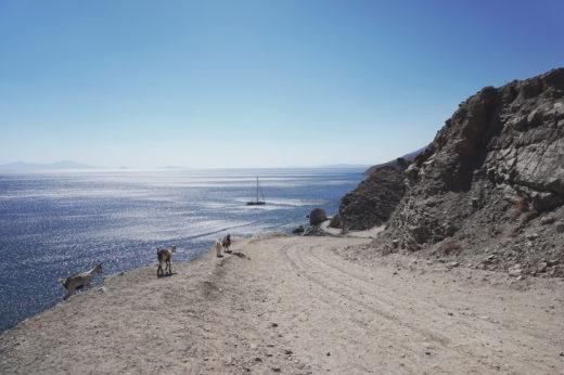 Widok na Morze Egejskie ze żwirową drogą skręcającą w prawo. Na niej znajdują się kozy. Obok po prawej znajduję się skała.