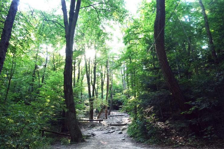 Ścieszka w lesie z kamieniami w Parku Świętokrzyskim.
