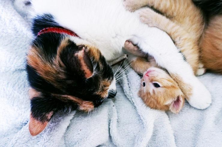 Mama kocia i kociątko wtulone w siebie.
